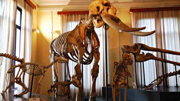 Una notte da paura...Jurassic night al Museo di Zoologia