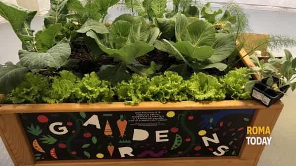 Gardens day: l'evento gratuito dedicato agli orti didattici inclusivi per la prima infanzia