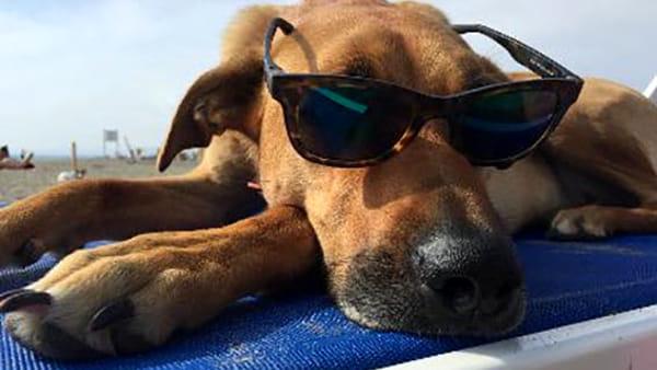 Baubeach: la prima spiaggia d'Italia per cani liberi e felici