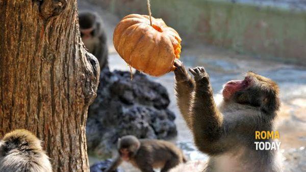 Halloween con gli animali al Bioparco di Roma