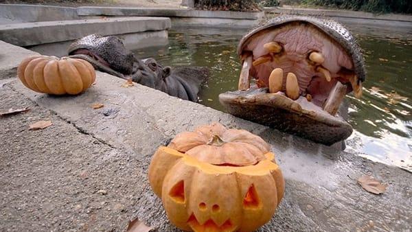Animali e zucche: Halloween al Bioparco