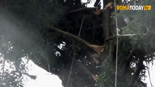 VIDEO | Il nuovo Spelacchio è componibile: montaggio in corso per l'albero più famoso del mondo