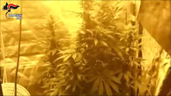 Serra di marijuana in un appartamento a Roma nord, sequestrate 250 piante: il video del blitz
