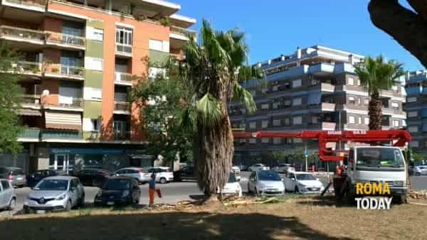 VIDEO | Ostia, giardinieri al lavoro: potate 250 palme