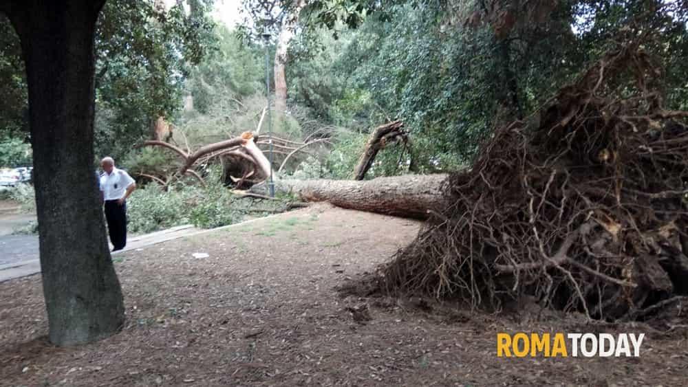Albero caduto viale Terme di Caracalla 1 ottobre 2018-3