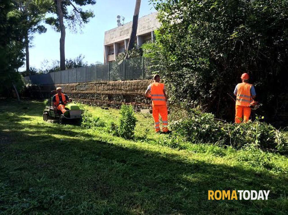 Ufficio Verde Pubblico Comune Di Bologna : Fiumicino verde pubblico: iniziati lavori di manutenzione a isola