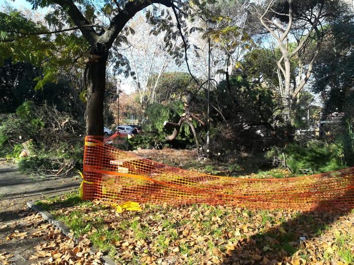 alberi caduti piazza navigatori (1)